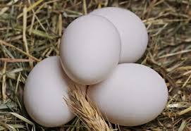 La guía completa del huevo